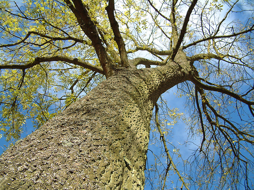 Looking up Tree